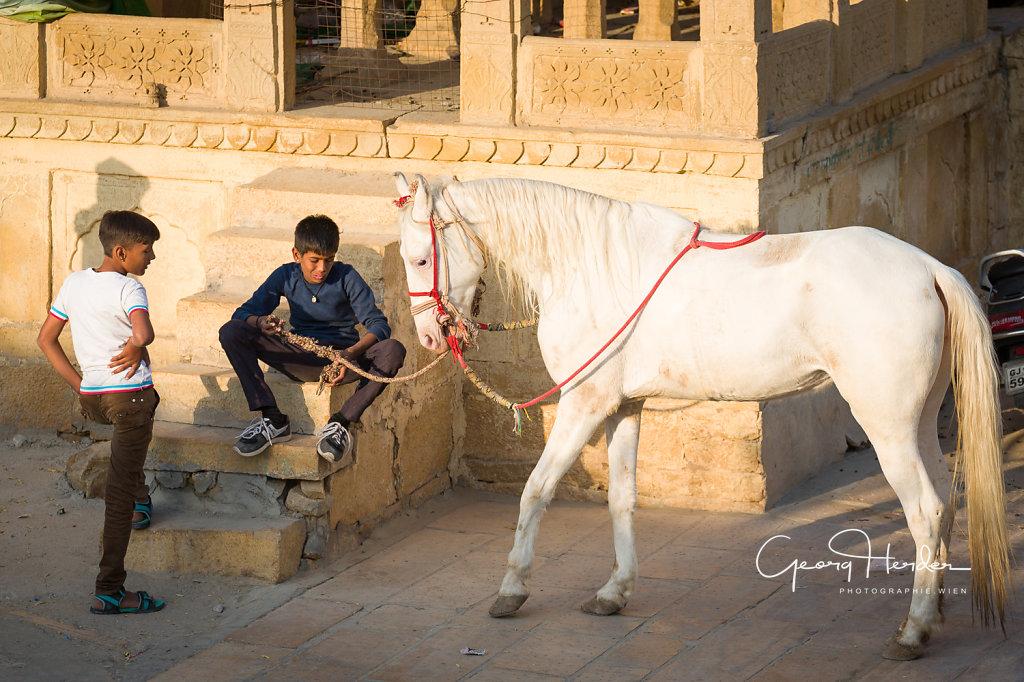 horse for rent - Jaisalmer