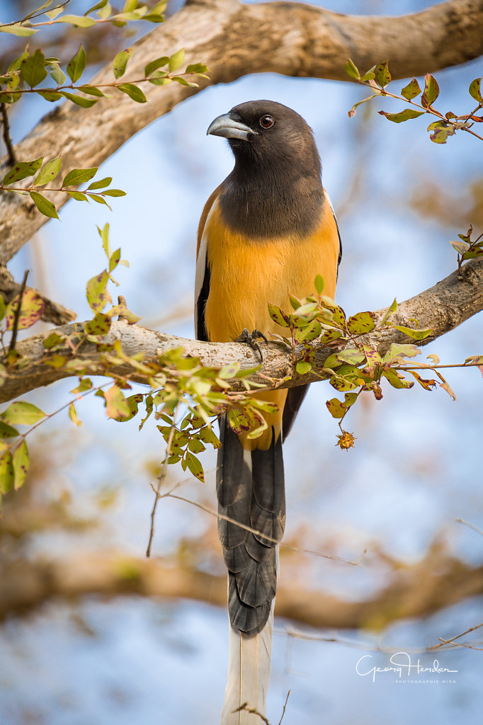 Bird - Ranthambore national park