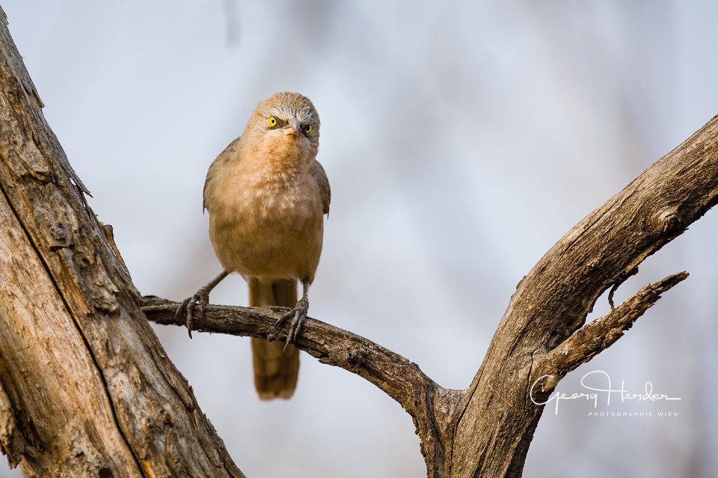 Bird - Ranthambore national park